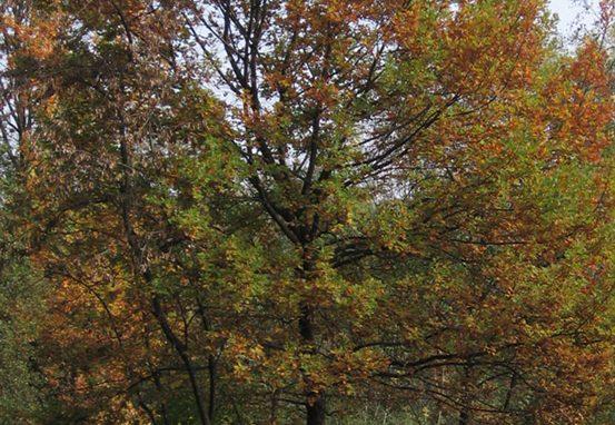 Parco di Legnano a due passi dal Welcome